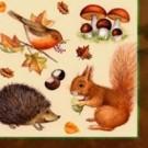 Écureuil et Hérisson