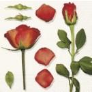Senteur de roses