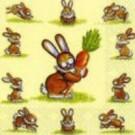Elli le lapin