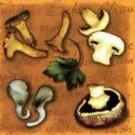 Champignons (Brun)
