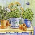 Herbes en pot sur une table