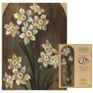 Patron AG - Narcisses en robe blanche