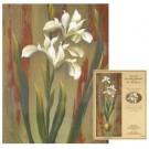 Patron AG - Iris en robe blanche