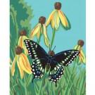 PBN - Papillon